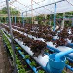 ใครอยากปลูกผักไร้ดินมาดู!! DIY วิธีทำ รางปลูกผักไฮโดรโปนิกส์กึ่งน้ำลึก จากท่อ PVC ทำเองได้ไม่ยากเกินเอื้อม