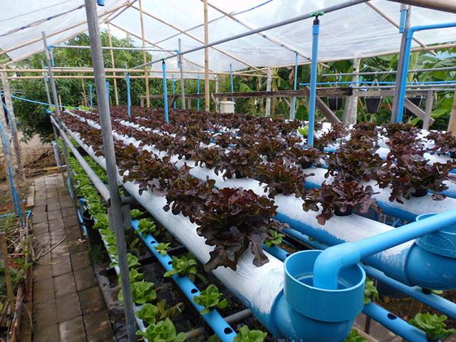 hydroponic-plant-from-pvc-diy-1
