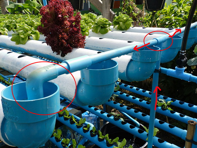 hydroponic-plant-from-pvc-diy-21