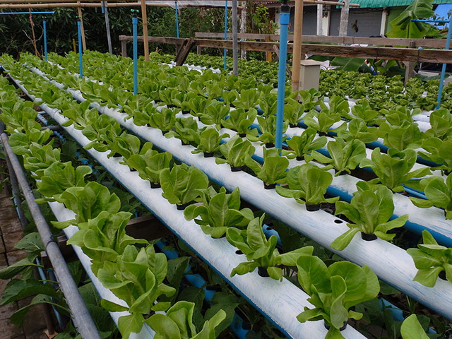 hydroponic-plant-from-pvc-diy-28
