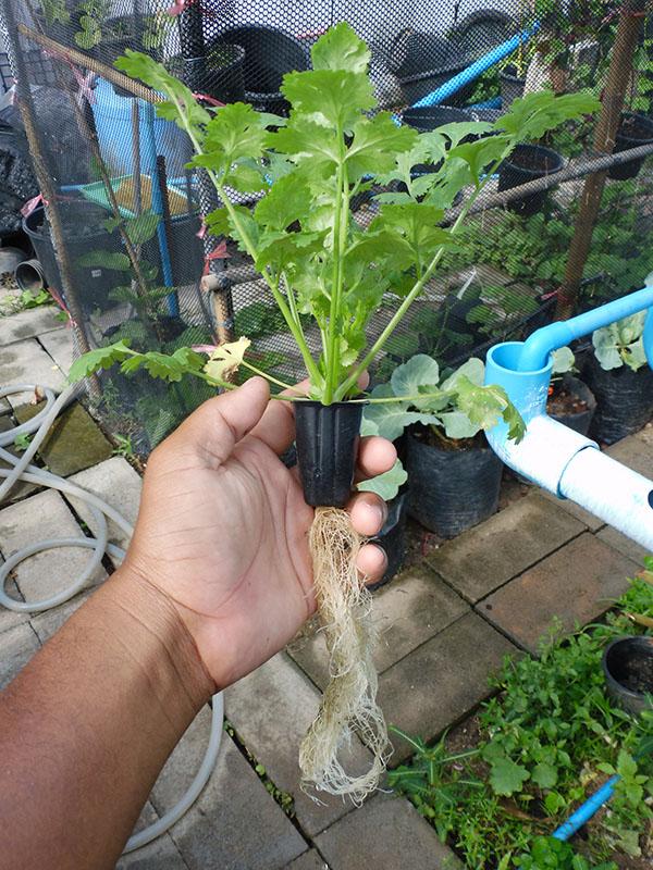 hydroponic-plant-from-pvc-diy-39