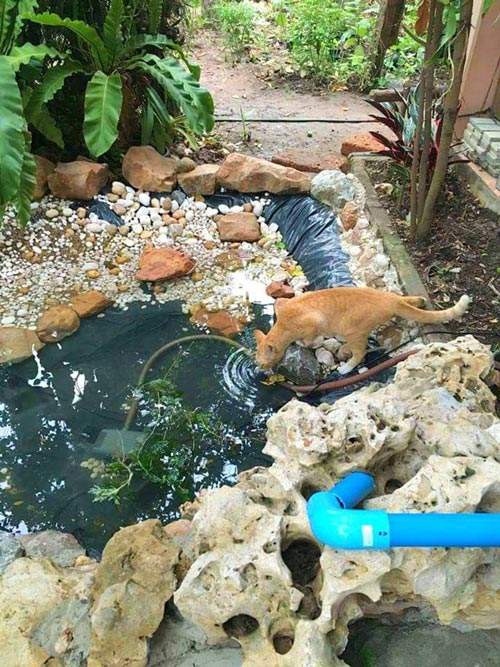 inexpensive-beautiful-fish-pond-garden-review-11