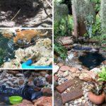 Review : ทำสวนหย่อมบ่อปลาขนาดเล็ก ด้วยงบประมาณที่แสนถูก