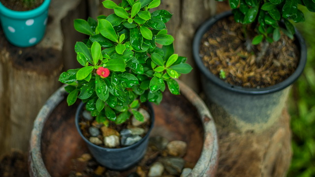 small-plants-decorated-garden-14