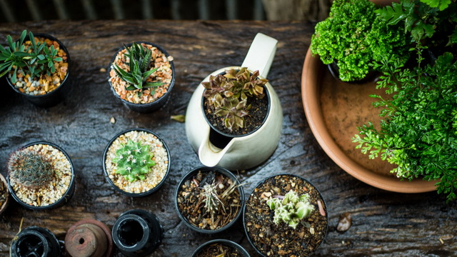 small-plants-decorated-garden-2