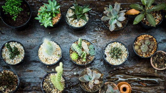 small-plants-decorated-garden-3
