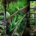 พาชมไอเดียจัดสวนด้วย ต้นไม้เล็กๆ สร้างบรรยากาศที่สดชื่นเขียวชะอุ่ม