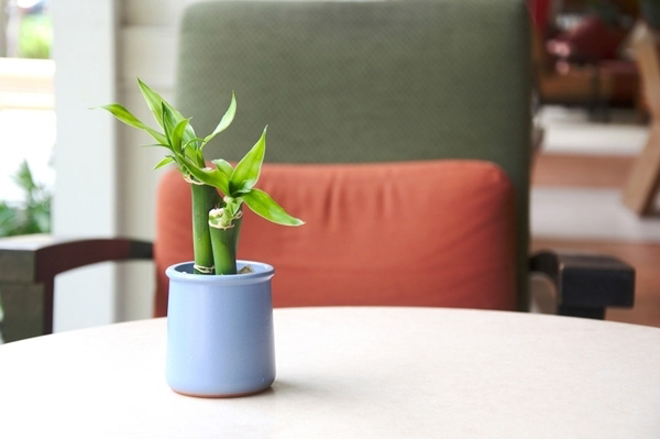 10-plants-for-bathroom-that-are-easy-to-take-care-1