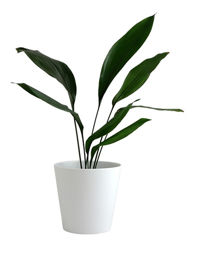 10-plants-for-bathroom-that-are-easy-to-take-care-3