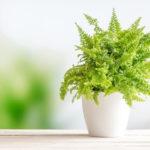 แนะนำ 10 ต้นไม้ สำหรับปลูกในห้องน้ำ ดูแลง่าย แม้อยู่ในมุมอับที่ไร้แสง