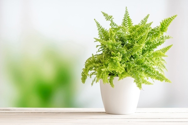 10-plants-for-bathroom-that-are-easy-to-take-care-4