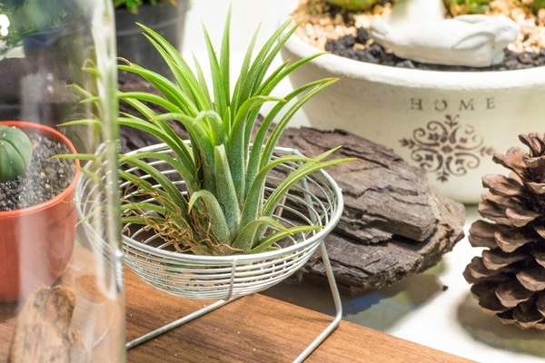 10-plants-for-bathroom-that-are-easy-to-take-care-6