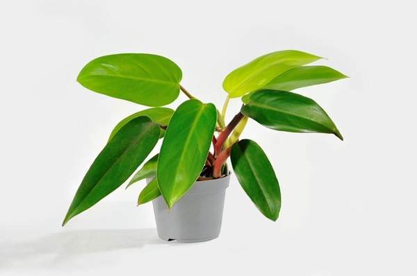 10-plants-for-bathroom-that-are-easy-to-take-care-7
