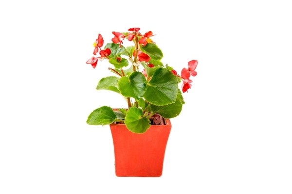 10-plants-for-bathroom-that-are-easy-to-take-care-8