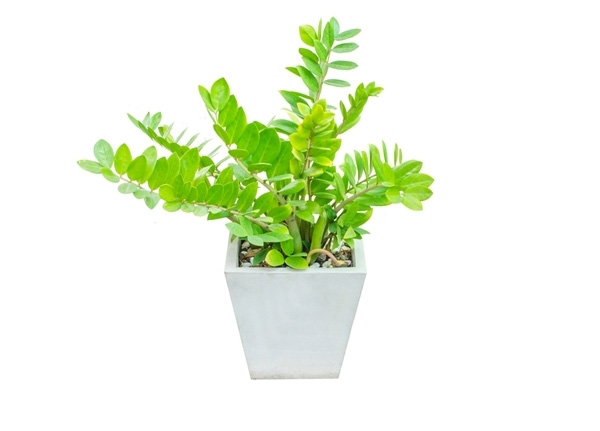 10-plants-for-bathroom-that-are-easy-to-take-care-9