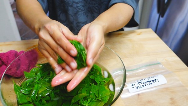 how-to-keep-basil-leaves-in-freeze-14