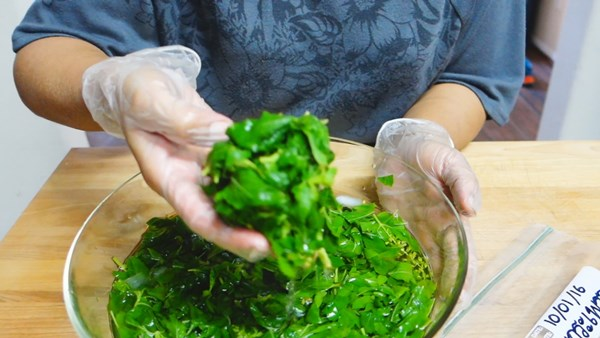 how-to-keep-basil-leaves-in-freeze-21