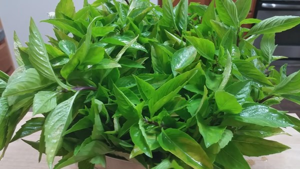 how-to-keep-basil-leaves-in-freeze-7