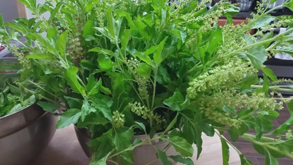how-to-keep-basil-leaves-in-freeze-8