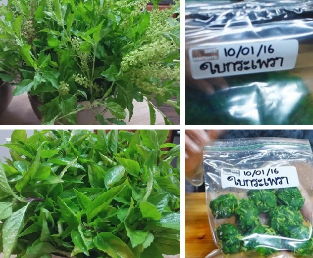 how-to-keep-basil-leaves-in-freeze-cover