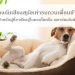 วิธีป้องกันเสียงสุนัขเห่าที่เลี้ยงไว้ในห้อง รบกวนเพื่อนข้างห้องในคอนโดหรือ อพาร์ตเม้นต์