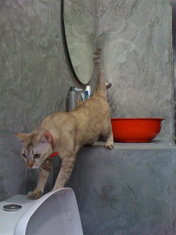 small-concrete-bathroom-review-56