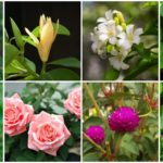 """แนะนำ 11 """"ดอกไม้มงคล"""" เหมาะสำหรับปลูกในบ้าน ความหมายดี นิยมใช้บูชาสิ่งศักดิ์สิทธิ์"""