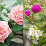 แนะนำ 11 ดอกไม้มงคล เหมาะสำหรับปลูกในบ้าน ความหมายดี นิยมใช้บูชาสิ่งศักดิ์สิทธิ์
