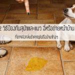 หมดปัญหากวนใจ!! 12 วิธีป้องกันสุนัขและแมว ฉี่หรือถ่ายหน้าบ้าน ที่อาจส่งกลิ่นรำคาญไปถึงบ้านข้างๆ