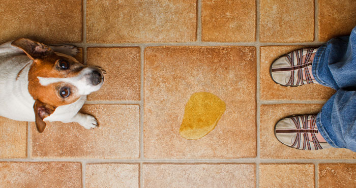 12-ways-to-prevent-smell-of-catdog-pee-and-stools