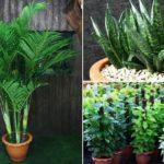 แนะนำ  3 ต้นไม้ ช่วยปรับสภาพอากาศภายในบ้านให้ดีขึ้น เพื่อสุขภาพของผู้อยู่อาศัย ห่างไกลจากโรคแพ้อากาศ