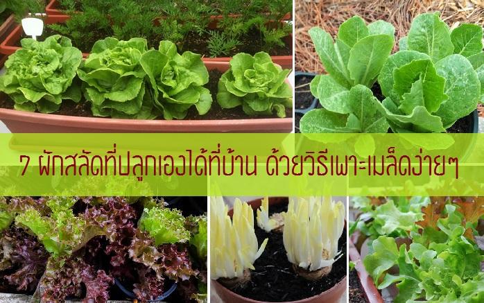 นายบุญมี กล่าวว่า ในช่วงนี้ผักบางชนิดไม่สามารถปลูกได้เนื่องจากเจอฝน  น้ำขังทำให้พืชผักเกิดการเน่าเสีย ...
