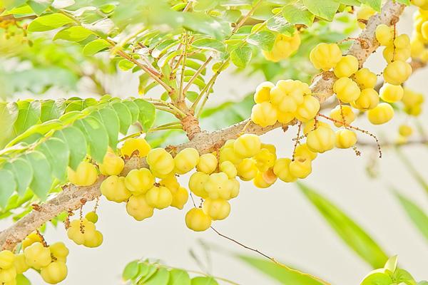 9-blessing-fruit-trees-for-garden-1