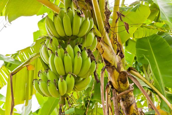 9-blessing-fruit-trees-for-garden-4