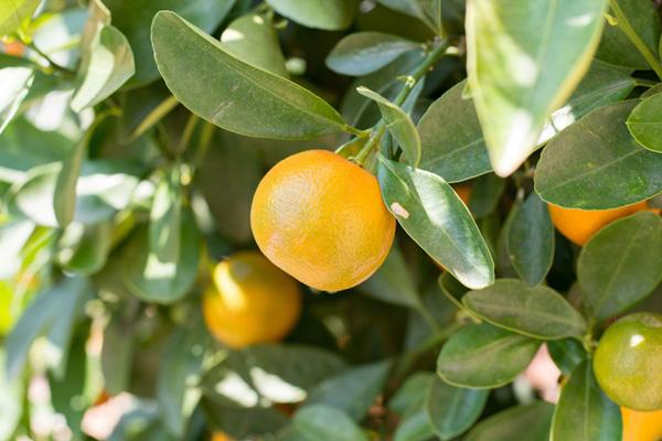 9-blessing-fruit-trees-for-garden-6