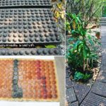 """DIY : วิธีทำ """"แม่พิมพ์แผ่นทางเดินคอนกรีตนวดฝ่าเท้า"""" เดินเล่นในสวน ได้ทั้งสุขภาพ และความรื่นรมย์"""