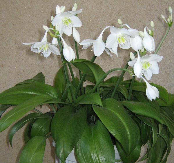 9-fortune-thai-herbs-5