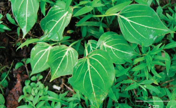 9-fortune-thai-herbs-7