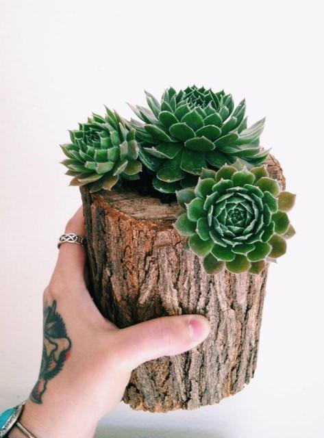 creative-planter-ideas-2