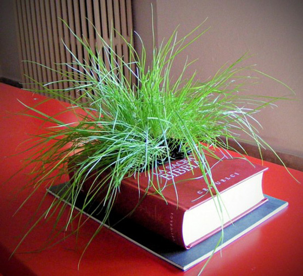 creative-planter-ideas-7