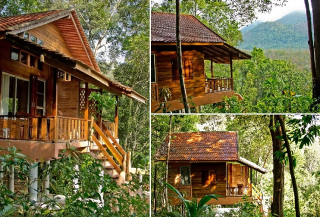 eco-wooden-resort-cottage-in-jungle-cover