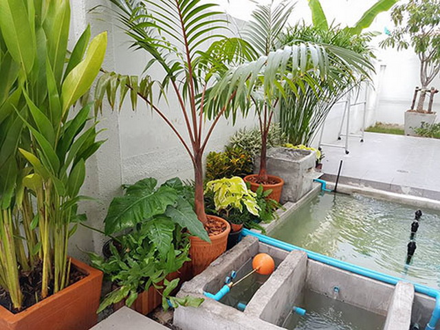 carp-fish-pond-and-small-garden-review (21)