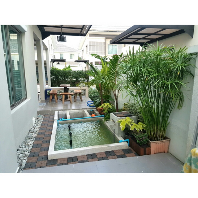 carp-fish-pond-and-small-garden-review (22)