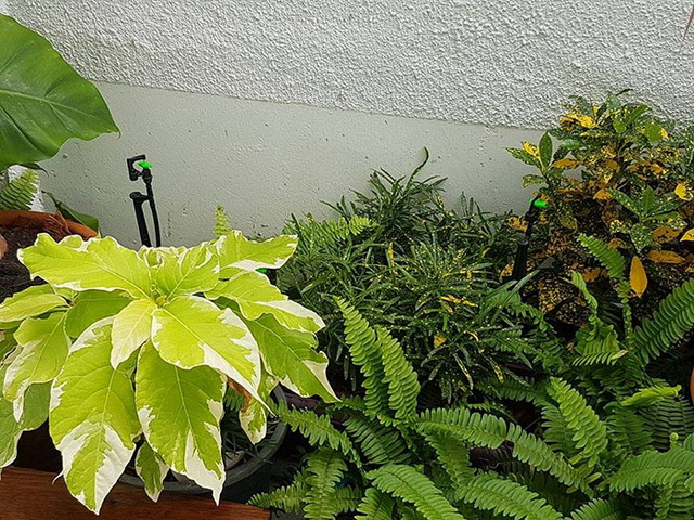 carp-fish-pond-and-small-garden-review (31)