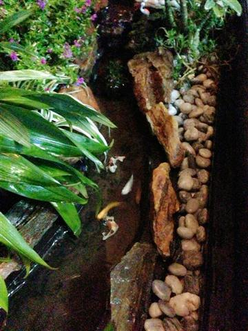 small waterfall garden condo patio (17)