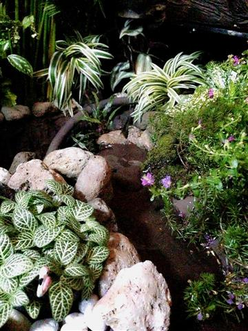 small waterfall garden condo patio (21)