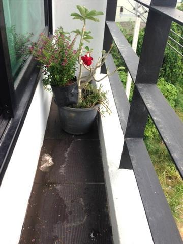 small waterfall garden condo patio (3)