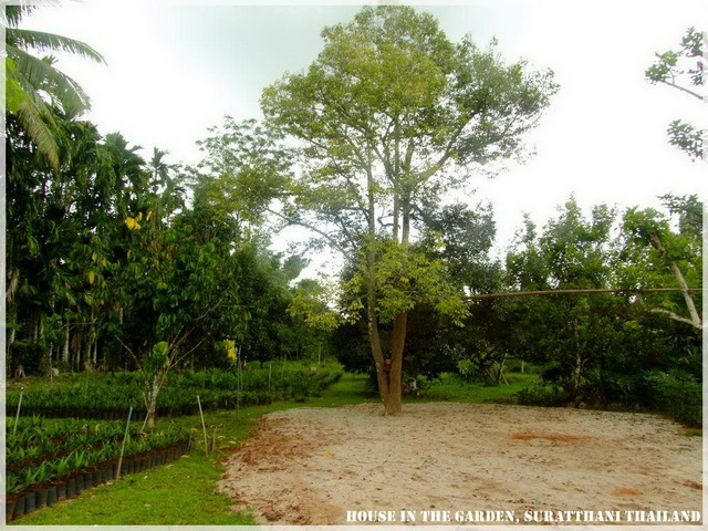 thai country half wood half concrete house review (3)