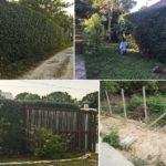 ปลูกรั้วต้นไม้สูง 3 เมตร ให้บ้านเย็นสบายด้วยสีเขียว ใช้งบประมาณถูกสุดๆ