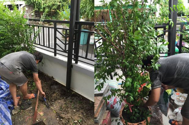 DIY side yard garden idea review (11)
